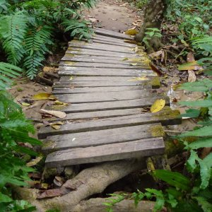 "1010205 – Photo ""Petit pont de bois"""
